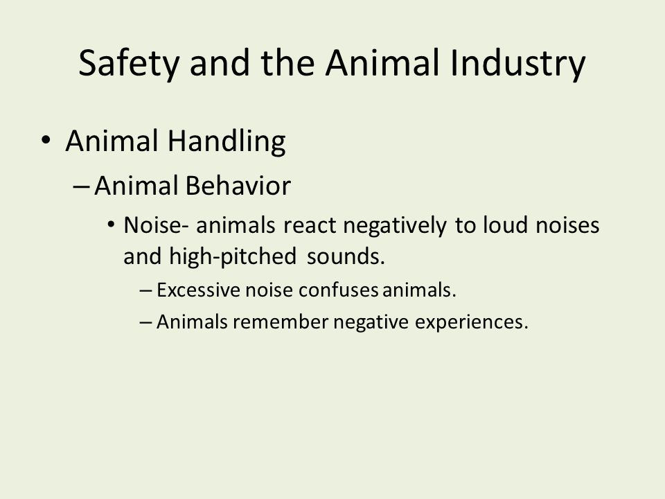 Safety and the Animal Industry Animal Handling – Animal Behavior Noise- animals react negatively to loud noises and high-pitched sounds. – Excessive n