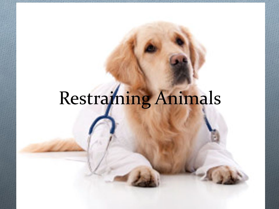 Restraining Animals