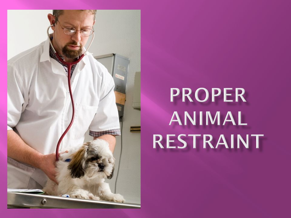  Proper restraint and handling techniques are essential for reducing stress to laboratory animals and the handler  More is NOT better.