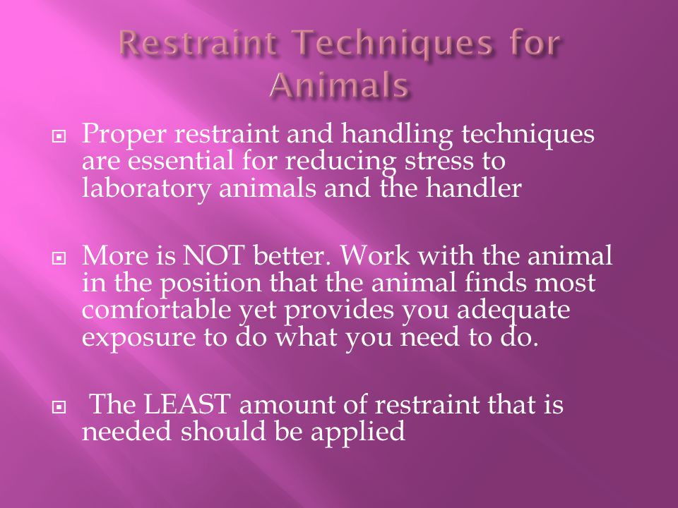  Proper restraint and handling techniques are essential for reducing stress to laboratory animals and the handler  More is NOT better. Work with the
