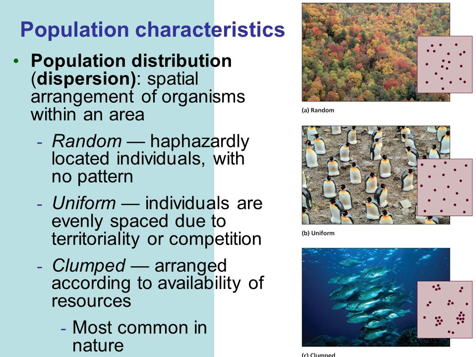 Population characteristics Population distribution (dispersion): spatial arrangement of organisms within an area - Random — haphazardly located individuals, with no pattern - Uniform — individuals are evenly spaced due to territoriality or competition - Clumped — arranged according to availability of resources - Most common in nature