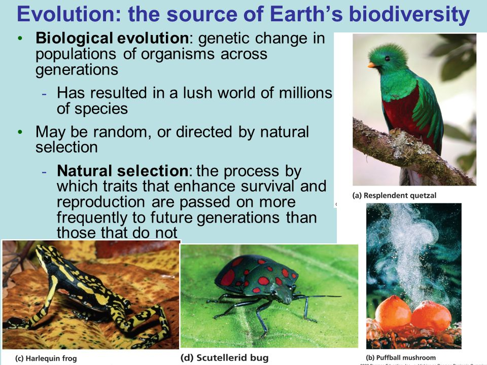 Evolution: the source of Earth's biodiversity Biological evolution: genetic change in populations of organisms across generations - Has resulted in a lush world of millions of species May be random, or directed by natural selection - Natural selection: the process by which traits that enhance survival and reproduction are passed on more frequently to future generations than those that do not