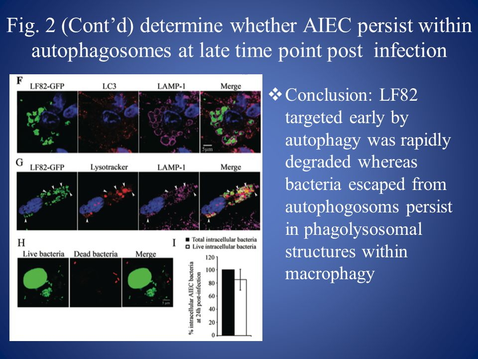Fig. 2 (Cont'd) determine whether AIEC persist within autophagosomes at late time point post infection  Conclusion: LF82 targeted early by autophagy