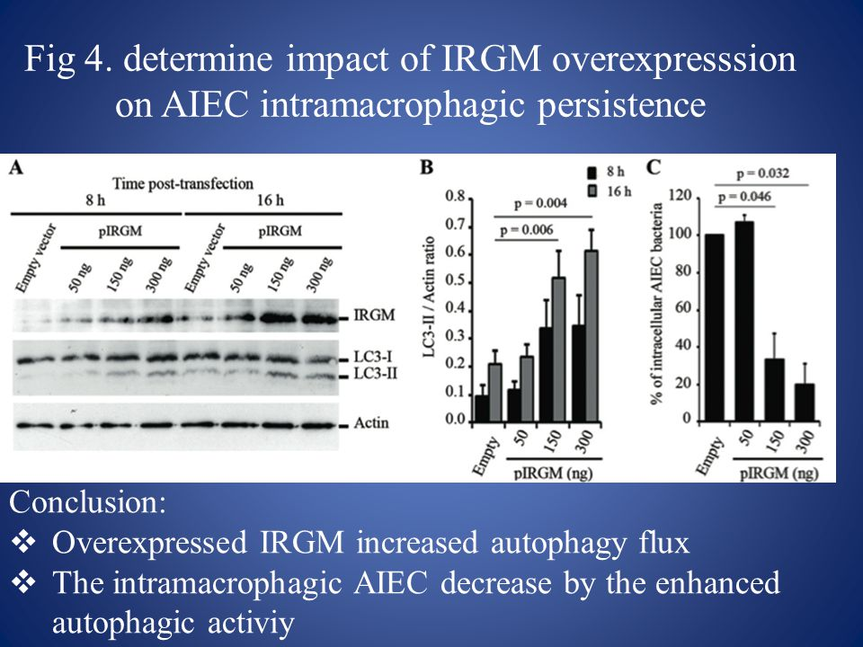 Fig 4. determine impact of IRGM overexpresssion on AIEC intramacrophagic persistence Conclusion:  Overexpressed IRGM increased autophagy flux  The i