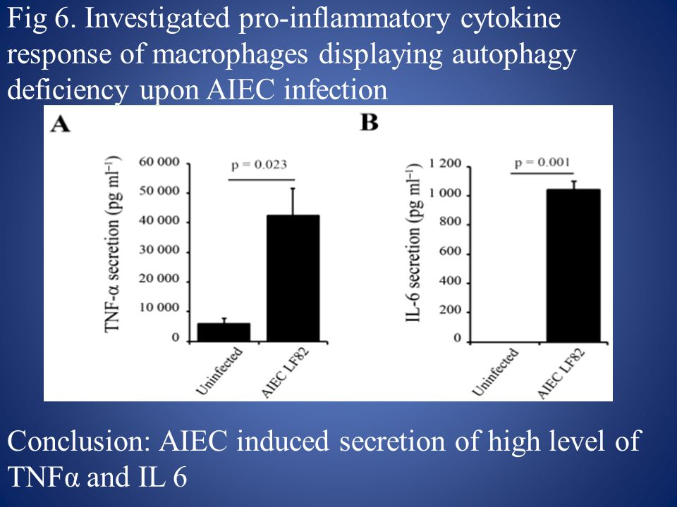 Fig 6. Investigated pro-inflammatory cytokine response of macrophages displaying autophagy deficiency upon AIEC infection Conclusion: AIEC induced sec