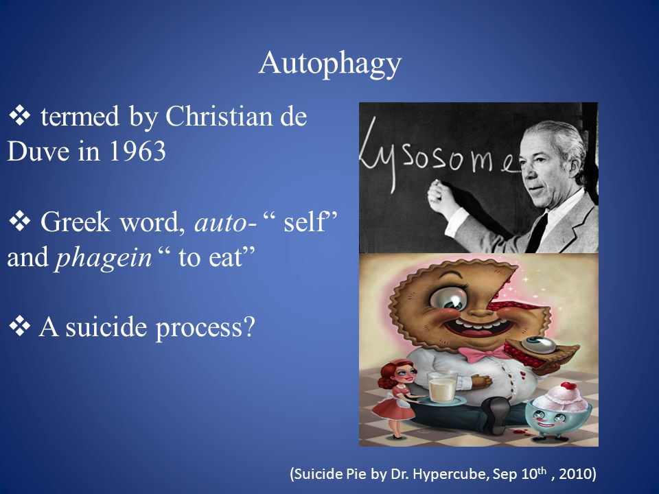 Autophagy  termed by Christian de Duve in 1963  Greek word, auto- self and phagein to eat  A suicide process.