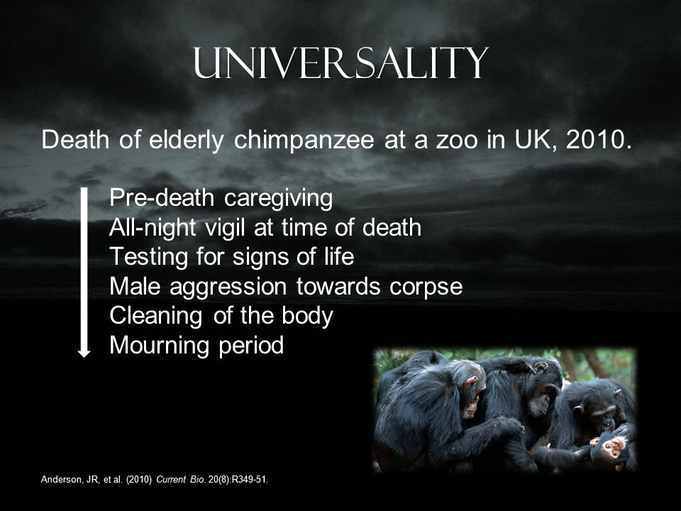 Universality Death of elderly chimpanzee at a zoo in UK, 2010.