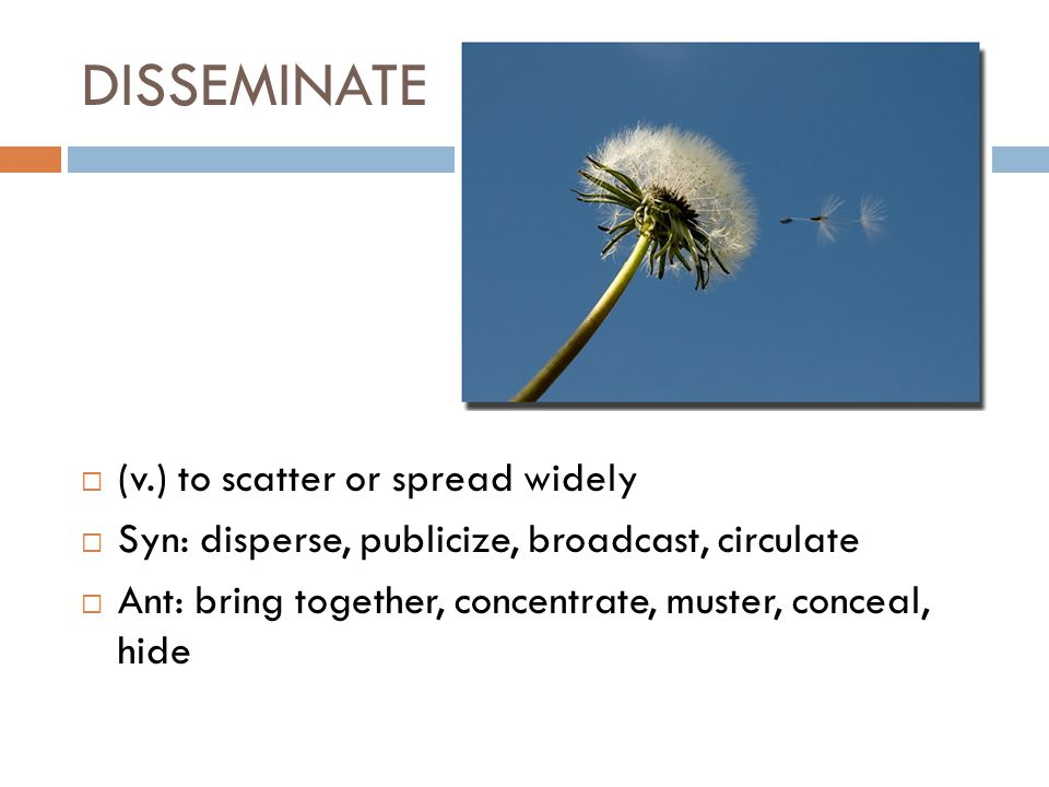 DISSEMINATE  (v.) to scatter or spread widely  Syn: disperse, publicize, broadcast, circulate  Ant: bring together, concentrate, muster, conceal, h