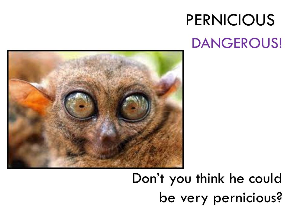 DANGEROUS! Don't you think he could be very pernicious? PERNICIOUS