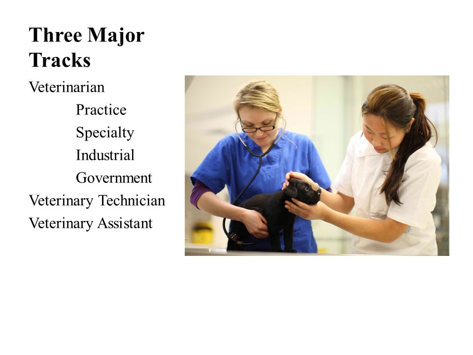 Veterinary Assistant Cost of Education: Typically earn while doing on the job training.
