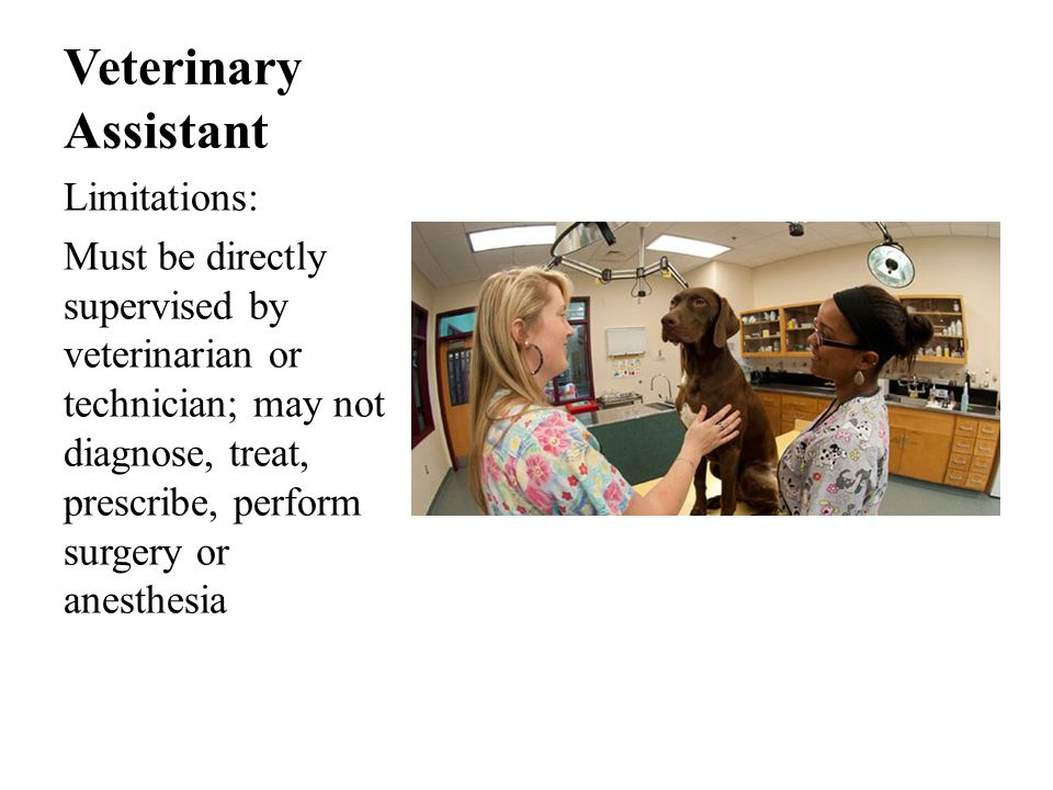 Veterinary Assistant Limitations: Must be directly supervised by veterinarian or technician; may not diagnose, treat, prescribe, perform surgery or anesthesia