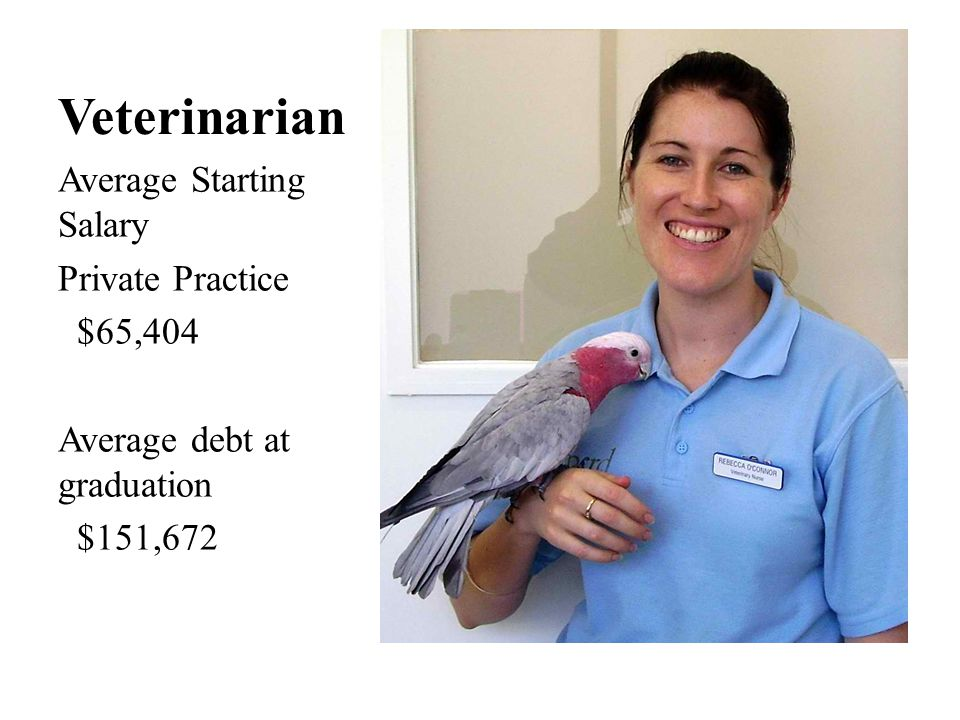 Veterinarian Average Starting Salary Private Practice $65,404 Average debt at graduation $151,672