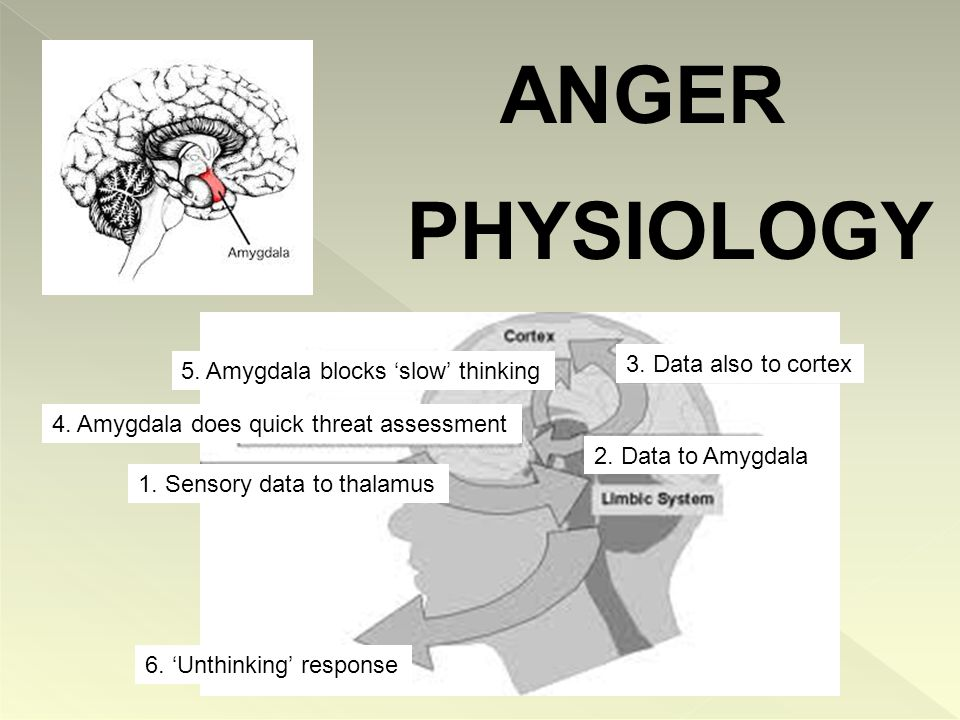 The Amygdala Radar – constantly firing Scanning for threats Can't stop it from firing Responsible for 'fight' or 'flight' Triggers appropriate survival behaviour Responds in.85 milliseconds Fires 100x faster than ability to think Effects on the Body Monitors threats ---- releases adrenalin Pupils dilate (gathering info) ------ laser focus Releases cortisol – creates stressful state - fight, flight, freeze Sweaty palms, facial redness, veins stick out