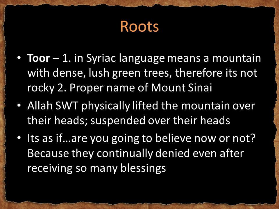 Roots Toor – 1.