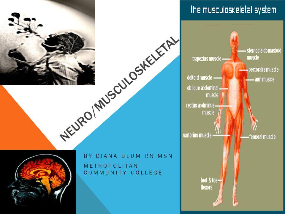 NEURO/MUSCULOSKELETAL BY DIANA BLUM RN MSN METROPOLITAN COMMUNITY COLLEGE