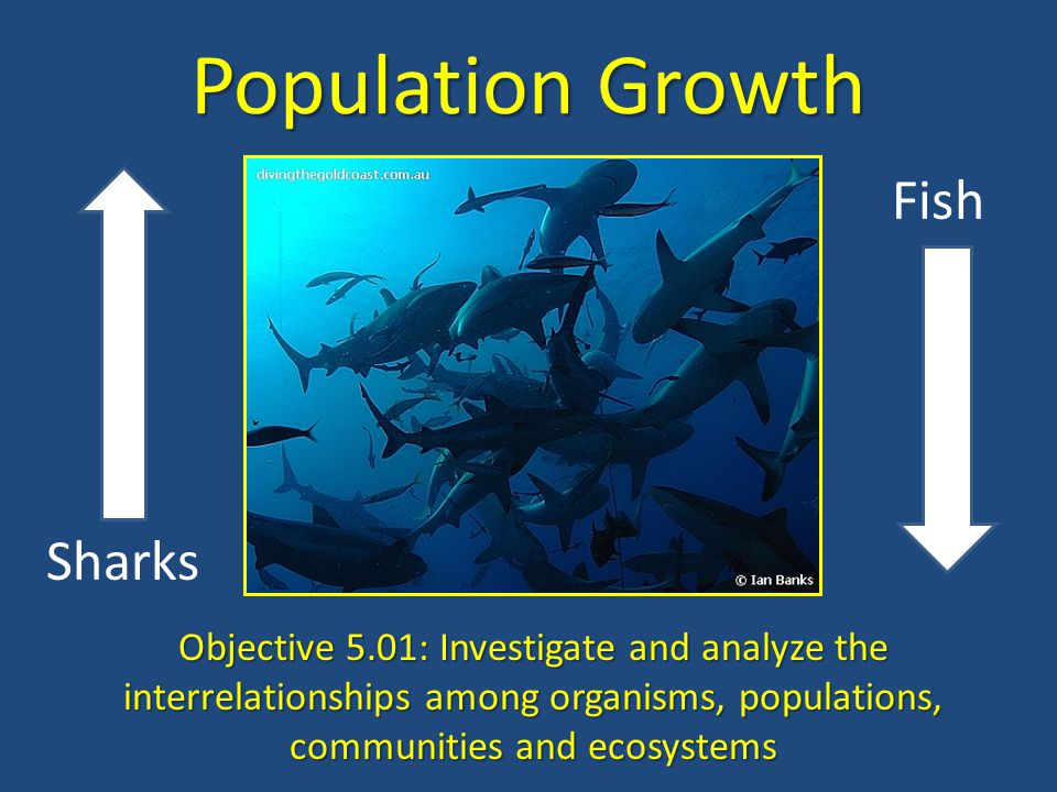 A Population is a group of organisms that belong to the same species and live in a particular place at the same time Population size refers to the number of individuals in the population.