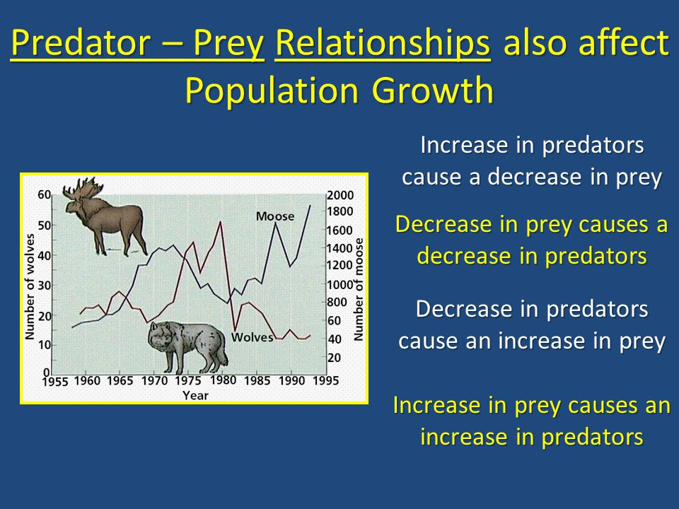 Predator – Prey Relationships also affect Population Growth Increase in predators cause a decrease in prey Decrease in prey causes a decrease in preda