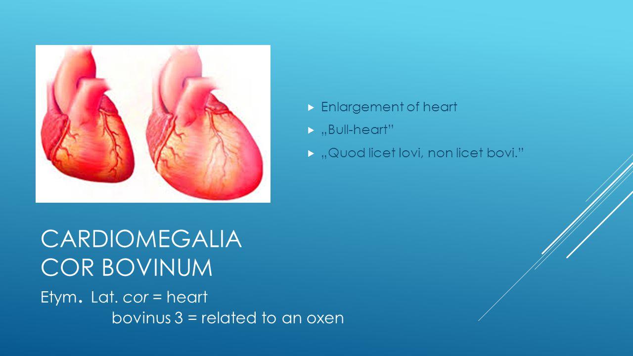 """CARDIOMEGALIA COR BOVINUM  Enlargement of heart  """"Bull-heart  """"Quod licet Iovi, non licet bovi. Etym."""
