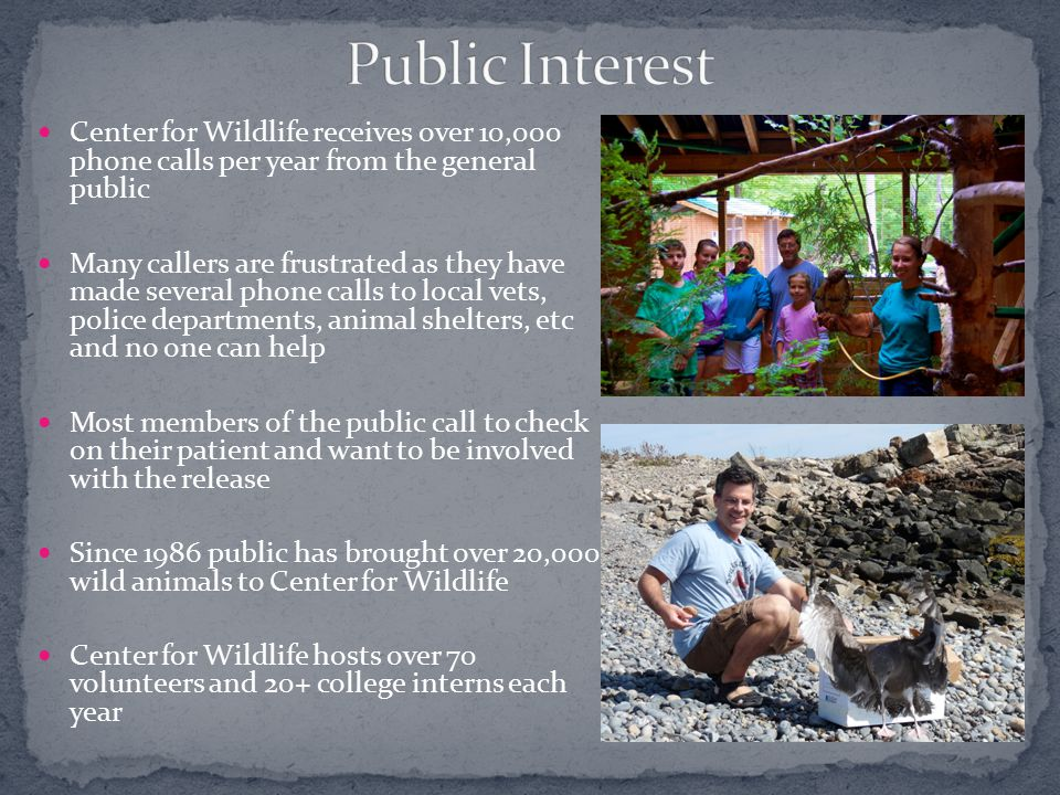 Center for Wildlife receives over 10,000 phone calls per year from the general public Many callers are frustrated as they have made several phone calls to local vets, police departments, animal shelters, etc and no one can help Most members of the public call to check on their patient and want to be involved with the release Since 1986 public has brought over 20,000 wild animals to Center for Wildlife Center for Wildlife hosts over 70 volunteers and 20+ college interns each year