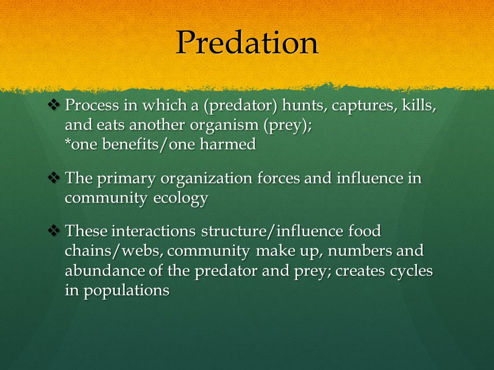 Predation  Process in which a (predator) hunts, captures, kills, and eats another organism (prey); *one benefits/one harmed  The primary organizatio