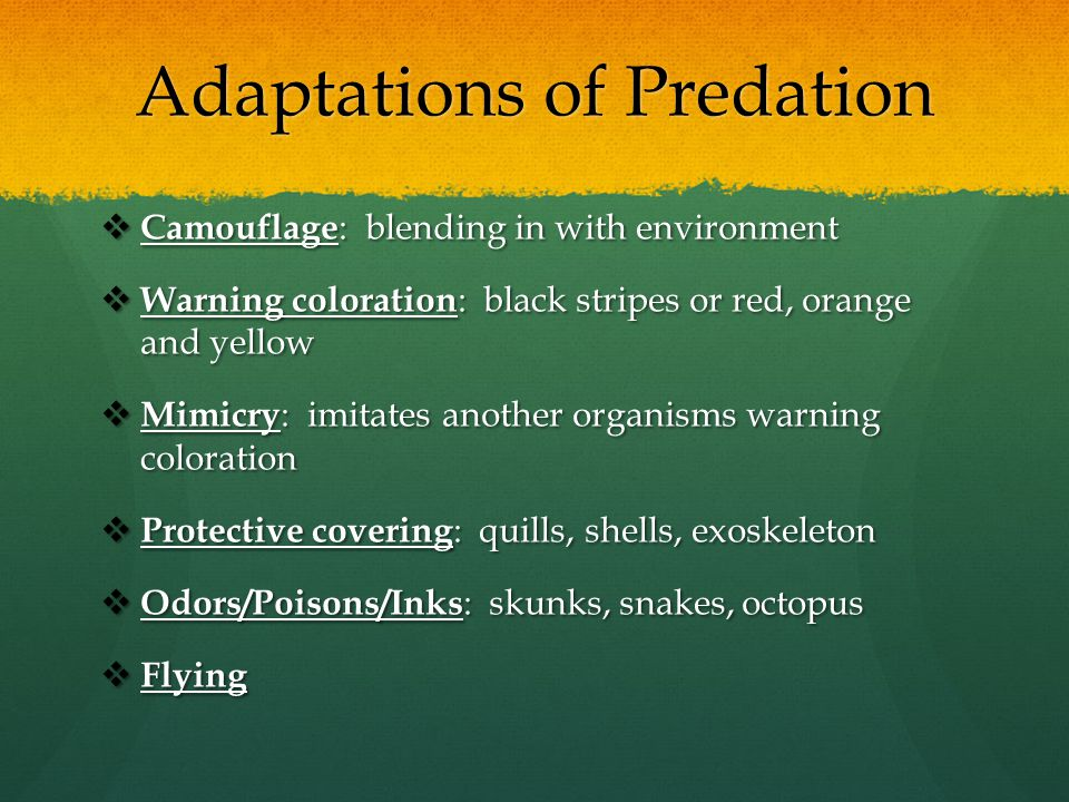 Adaptations of Predation  Camouflage : blending in with environment  Warning coloration : black stripes or red, orange and yellow  Mimicry : imitat