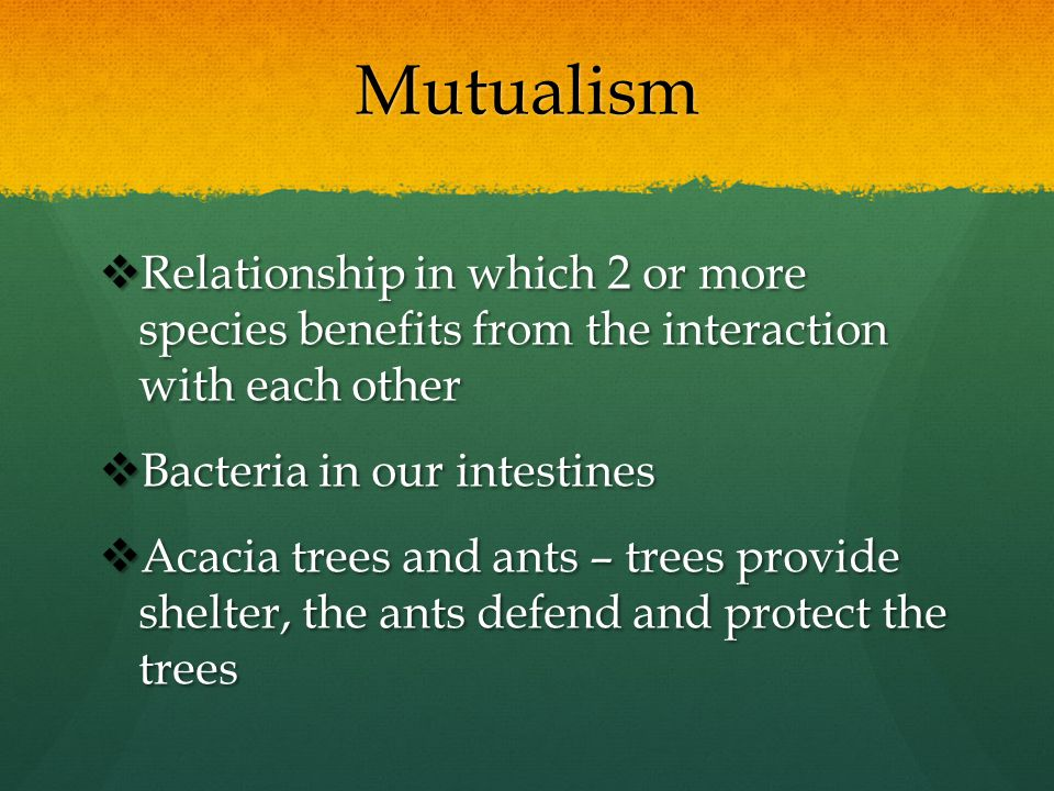 Mutualism  Relationship in which 2 or more species benefits from the interaction with each other  Bacteria in our intestines  Acacia trees and ants
