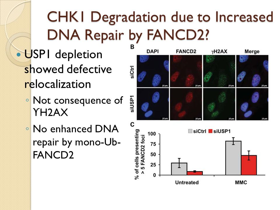 CHK1 Degradation due to Increased DNA Repair by FANCD2.