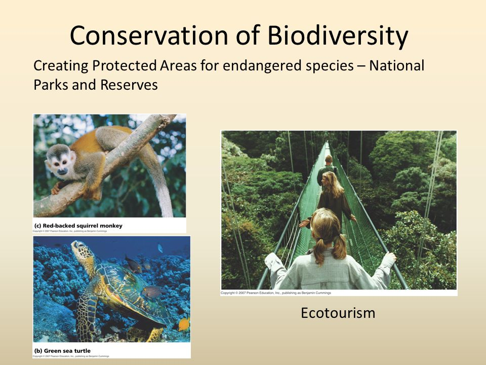 Conservation of Biodiversity Creating Protected Areas for endangered species – National Parks and Reserves Ecotourism