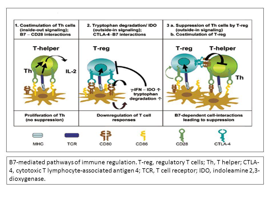B7-mediated pathways of immune regulation.