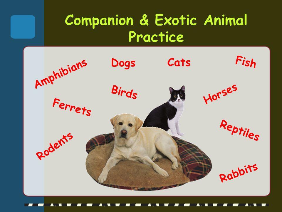 Food Animal Practice