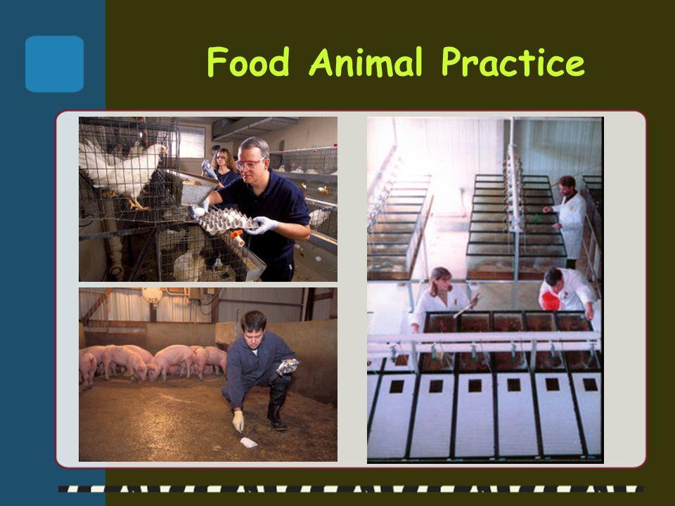 Mixed Animal Practice