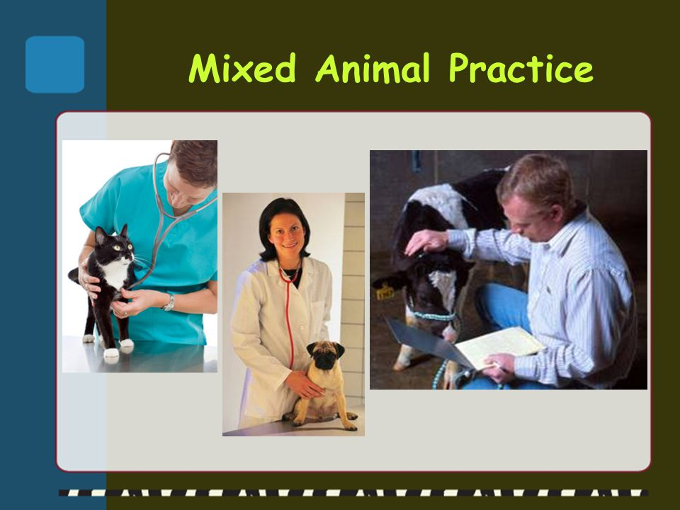 The Possibilities are Endless.Where do veterinarians work.