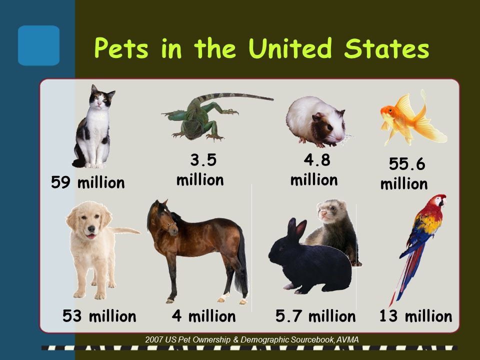 Pets in the United States 2007 US Pet Ownership & Demographic Sourcebook, AVMA 55.6 million 53 million 4 million 5.7 million 59 million 3.5 million 4.