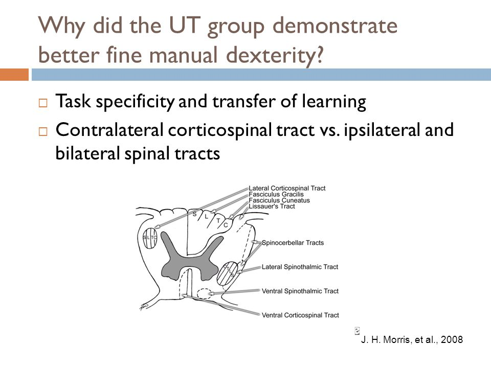 Why did the UT group demonstrate better fine manual dexterity.