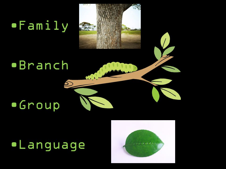 West Germanic (group) Germanic (branch) Indo-European (family) English (language)