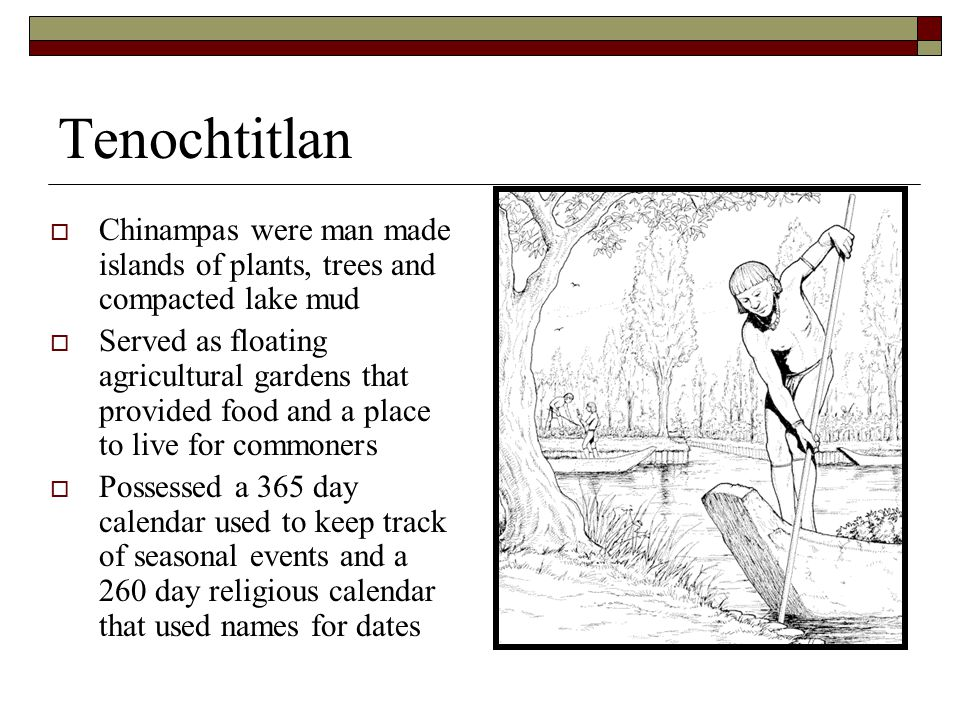 Tenochtitlan  Chinampas were man made islands of plants, trees and compacted lake mud  Served as floating agricultural gardens that provided food and a place to live for commoners  Possessed a 365 day calendar used to keep track of seasonal events and a 260 day religious calendar that used names for dates