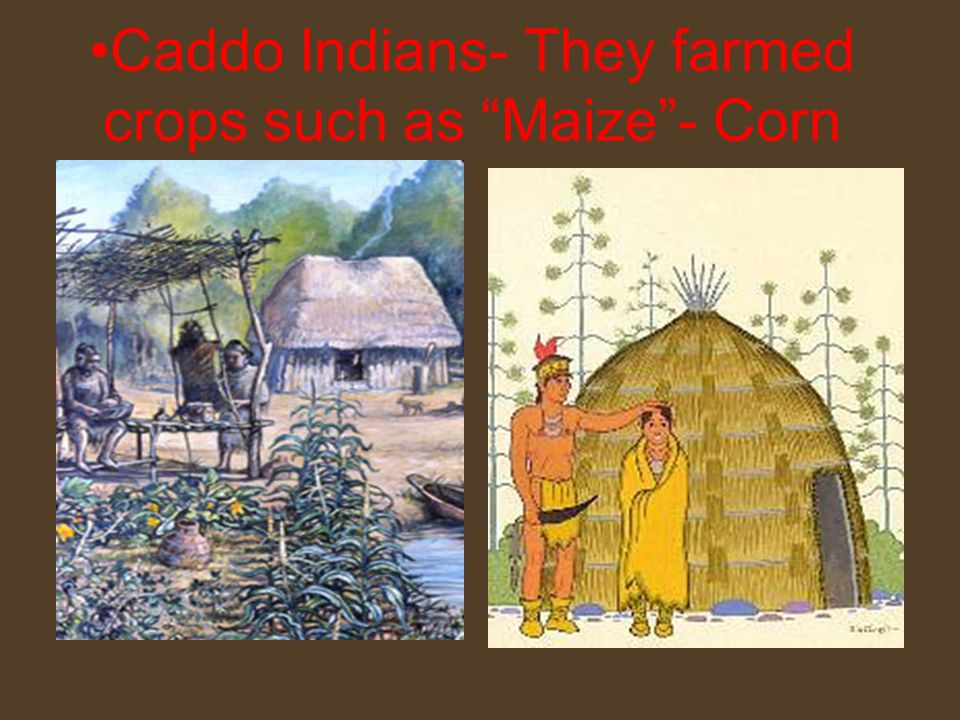 Caddo Indians- They farmed crops such as Maize - Corn