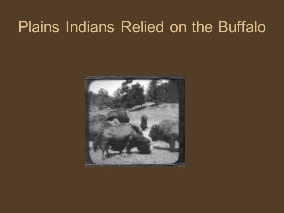 Plains Indians Relied on the Buffalo