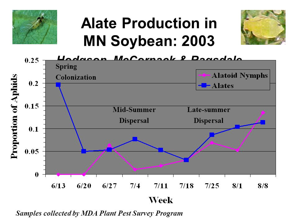 Alate Production in MN Soybean: 2003 Hodgson, McCornack & Ragsdale Samples collected by MDA Plant Pest Survey Program Spring Colonization Mid-Summer Dispersal Late-summer Dispersal