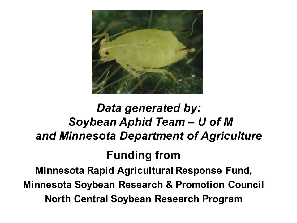 Funding from Minnesota Rapid Agricultural Response Fund, Minnesota Soybean Research & Promotion Council North Central Soybean Research Program Data generated by: Soybean Aphid Team – U of M and Minnesota Department of Agriculture