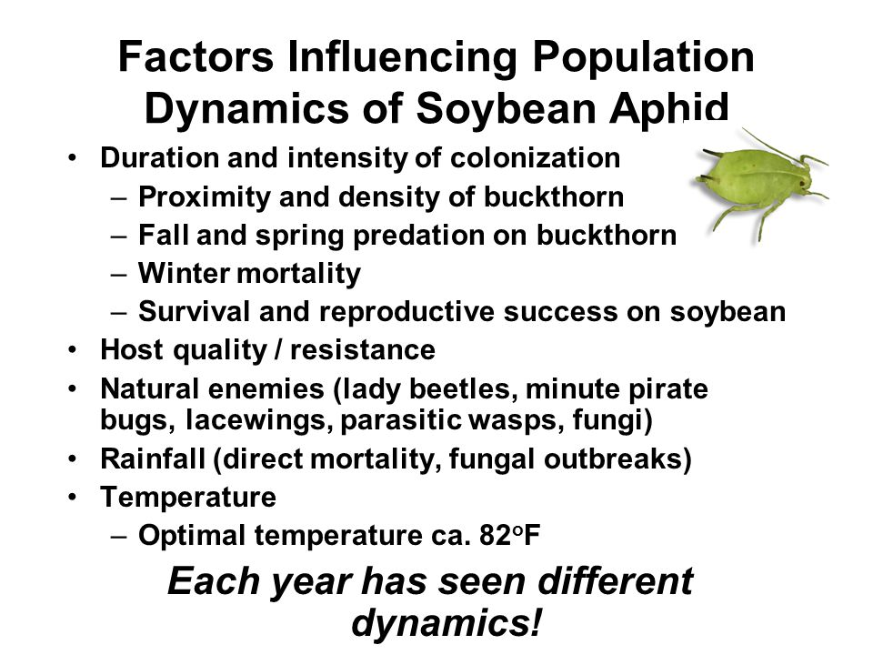 Factors Influencing Population Dynamics of Soybean Aphid Duration and intensity of colonization –Proximity and density of buckthorn –Fall and spring p