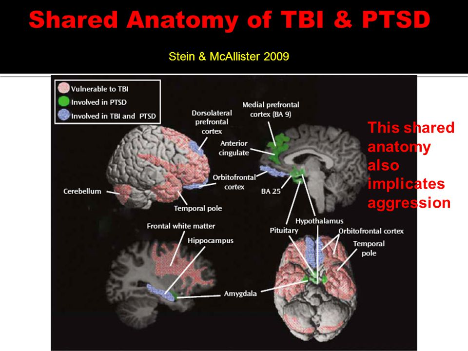Stein & McAllister 2009 This shared anatomy also implicates aggression