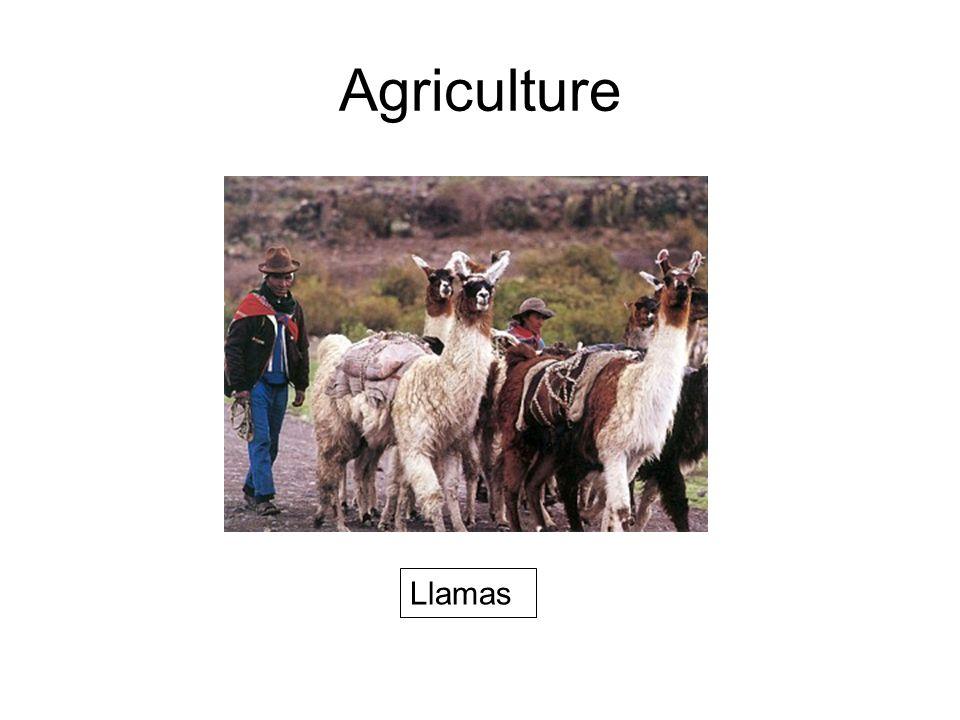 Agriculture Llamas