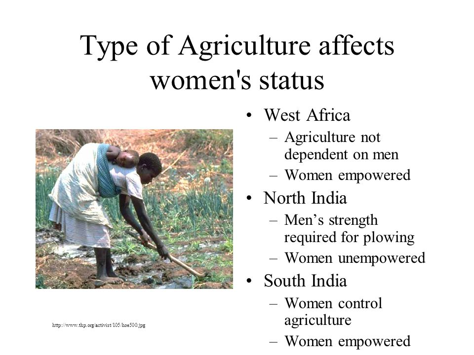 Type of Agriculture affects women s status West Africa –Agriculture not dependent on men –Women empowered North India –Men's strength required for plowing –Women unempowered South India –Women control agriculture –Women empowered http://www.thp.org/activist/105/hoe500.jpg