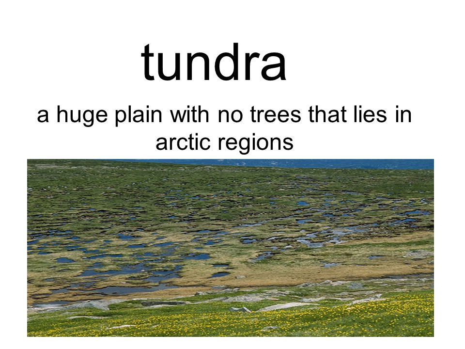 tundra a huge plain with no trees that lies in arctic regions