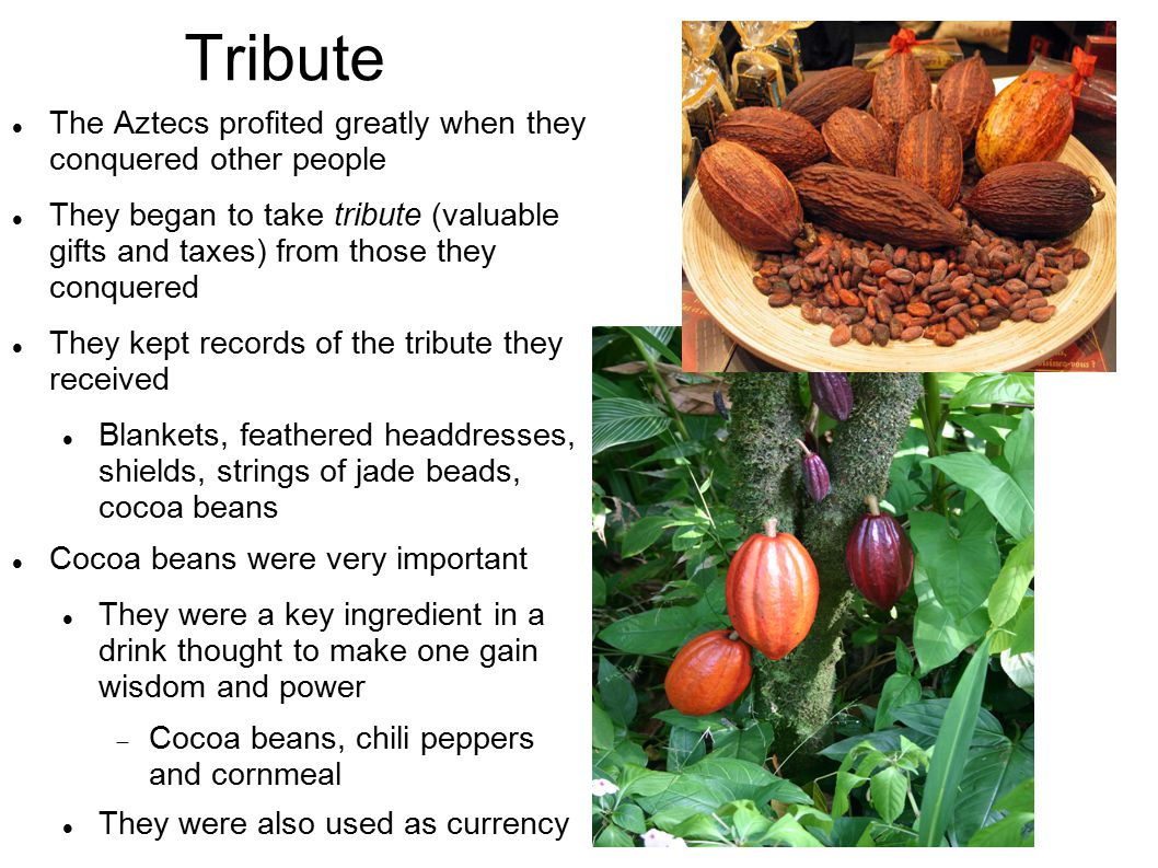 Tribute The Aztecs profited greatly when they conquered other people They began to take tribute (valuable gifts and taxes) from those they conquered They kept records of the tribute they received Blankets, feathered headdresses, shields, strings of jade beads, cocoa beans Cocoa beans were very important They were a key ingredient in a drink thought to make one gain wisdom and power  Cocoa beans, chili peppers and cornmeal They were also used as currency