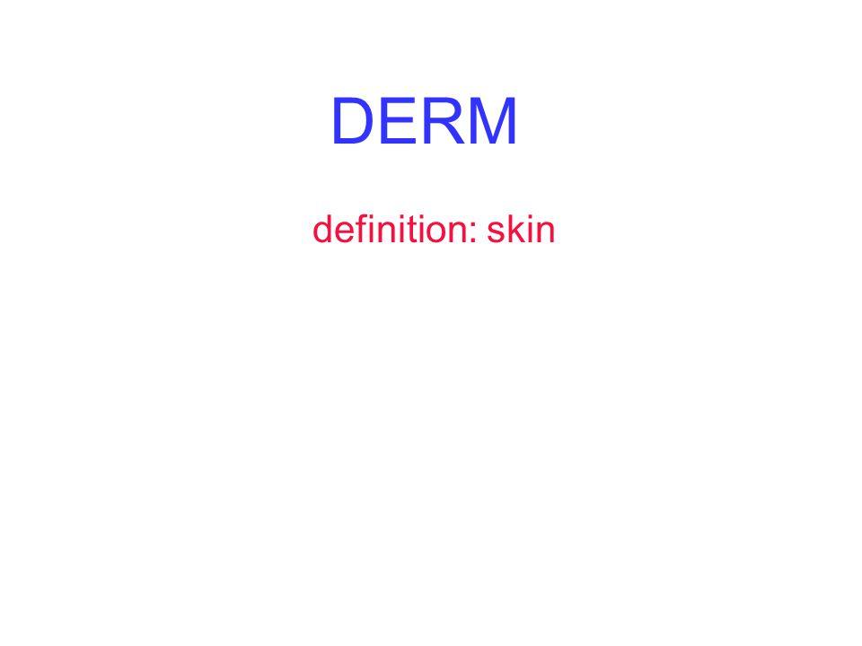 DERM definition: skin