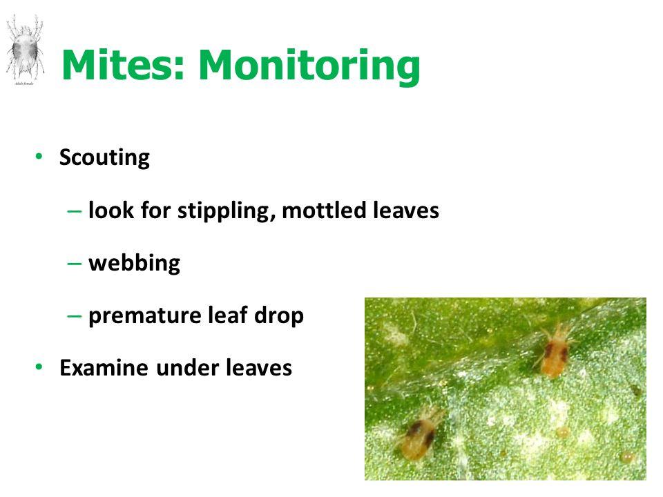 Mites: Monitoring Scouting – look for stippling, mottled leaves – webbing – premature leaf drop Examine under leaves