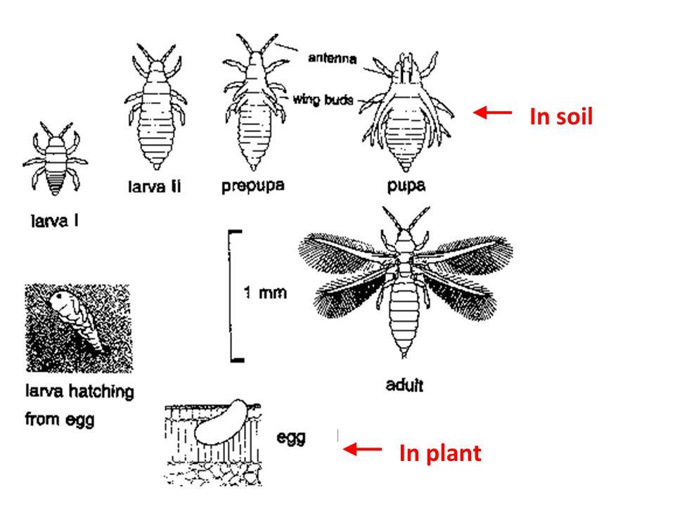 In soil In plant