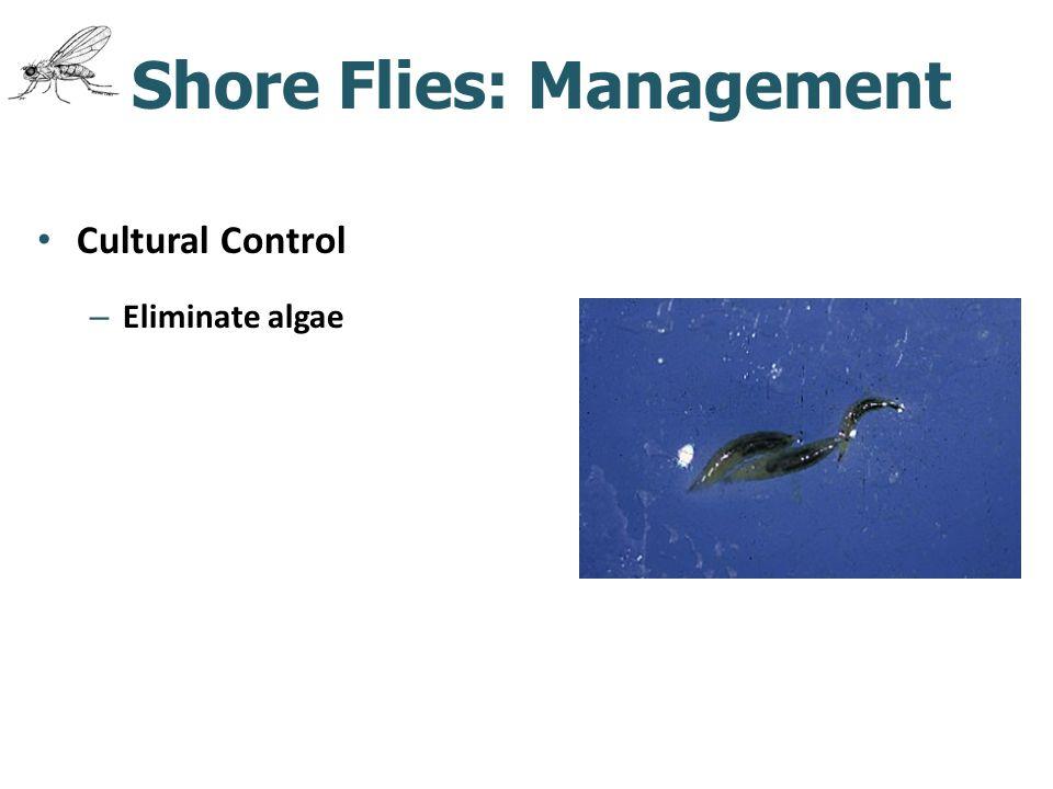 Shore Flies: Management Cultural Control – Eliminate algae